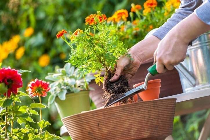 decorating ideas for your back yard in Colorado Springs